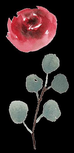 RoseWatercolor1